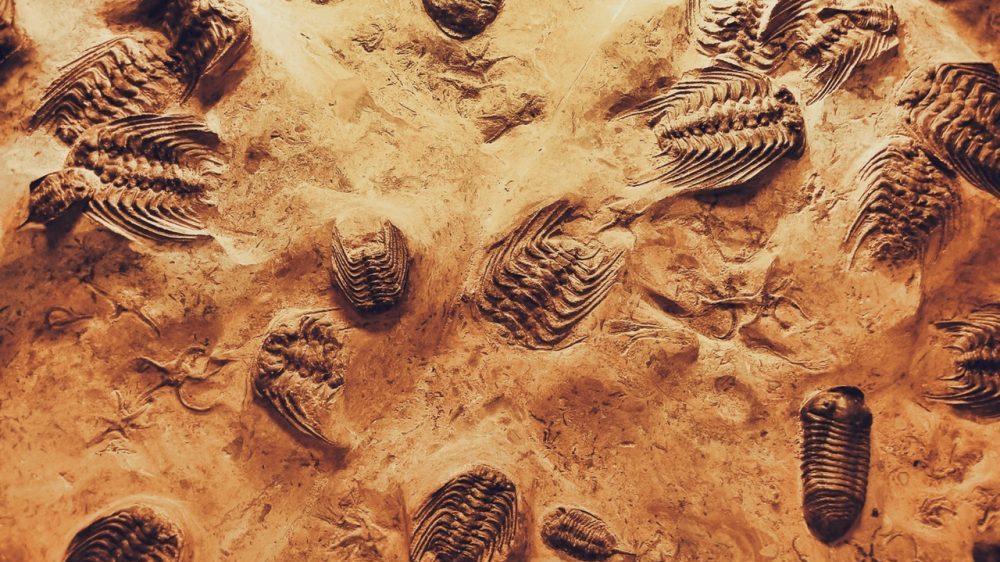 unearth bones